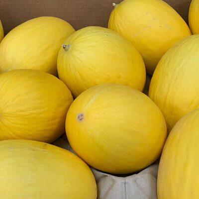 Melon Honey Dew