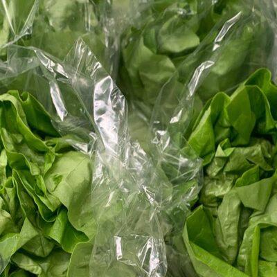 Lettuce Plain
