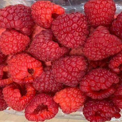 Top Fruits Product _Raspberries