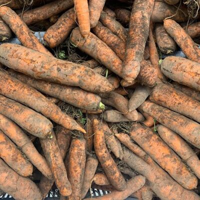 Carrots Dirty