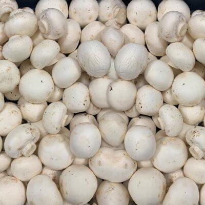 Mushrooms Cup
